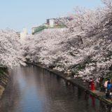 松川べり桜