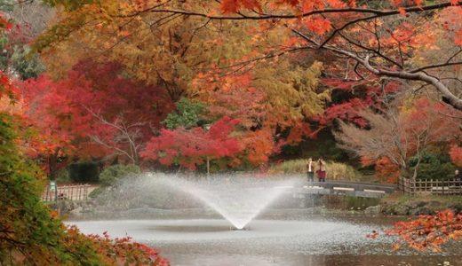 高岡古城公園で紅葉狩り