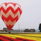 【チューリップバルーン2019@砺波】チューリップ畑に色とりどりの気球がステキです!