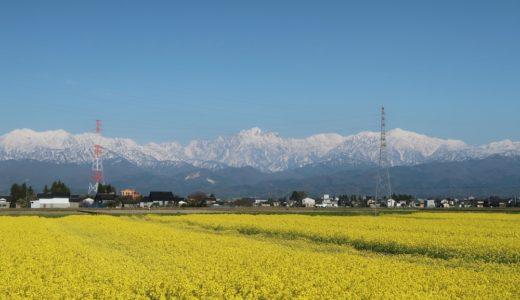 立山連峰と菜の花のステキなコラボレーション@富山市水橋