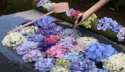 【倶利伽羅不動寺鳳凰殿】色とりどりの紫陽花が咲いています!花手水が素敵です♪